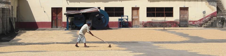 La Fabrique du Café - Production : Torréfacteur, torréfaction café